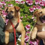 Dogs at Carlsbad's Flower Fields