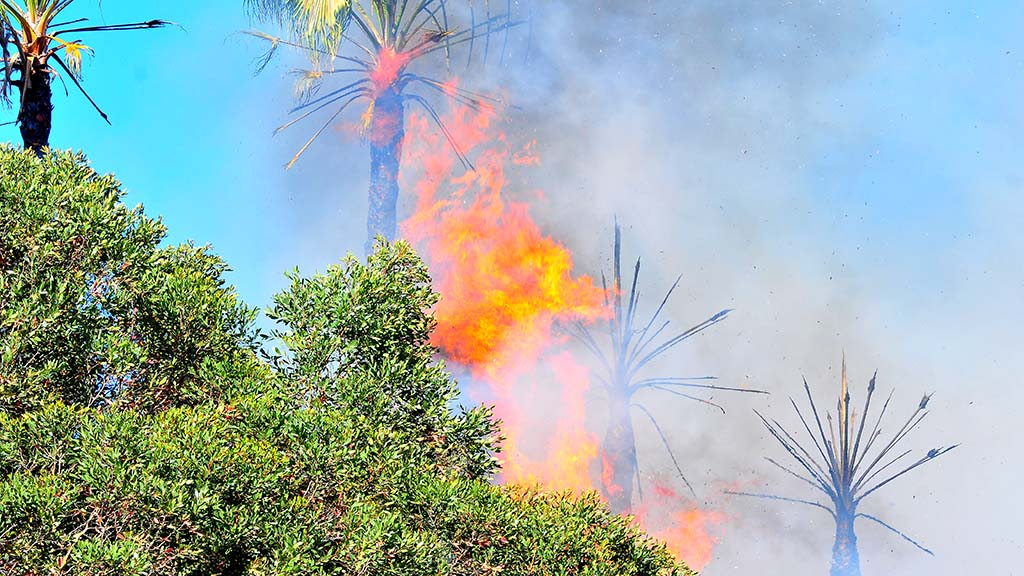 A fire in Del Cerro sets palm trees ablaze near a housing development.