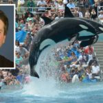 Killer whales perform for crowds at SeaWorld San Diego. Brett Kavanaugh inset.