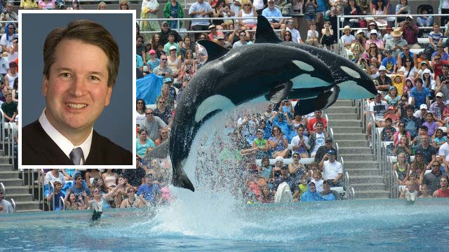 Incidents At Seaworld Parks: SCOTUS Nominee Kavanaugh Backed SeaWorld In Case Involving