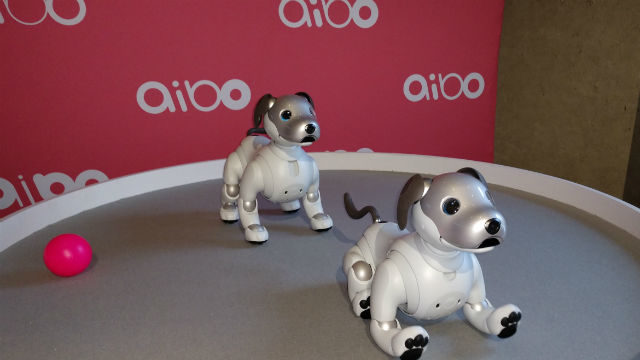 Aibo robotic dogs
