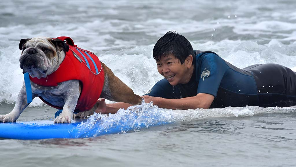 An owner rides a surfboard with his dog in the Helen Woodward Dog Surf-a-thon at Del Mar Beach