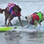 Dogs enjoyed the warm surf in foggy conditions on Sunday morning at Del Mar Beach.