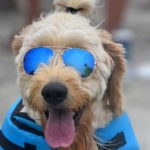 A few dogs wore shades, but the sun didn't come out until noon at Del Mar Beach.