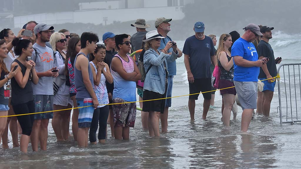 More than one hundred spectators watch the Helen Woodward Animal Center's 13th annual Surf Dog Surf-a-Thon at Dog Beach.