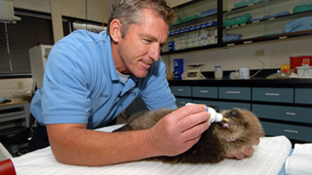 SeaWorld veterinarian with sea otter