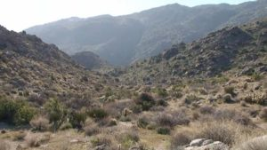 Tubb Canyon near Borrego Springs.