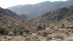 Tubb Canyon near Borrego Springs.