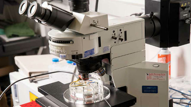 Microscope used in pancreatic cancer research