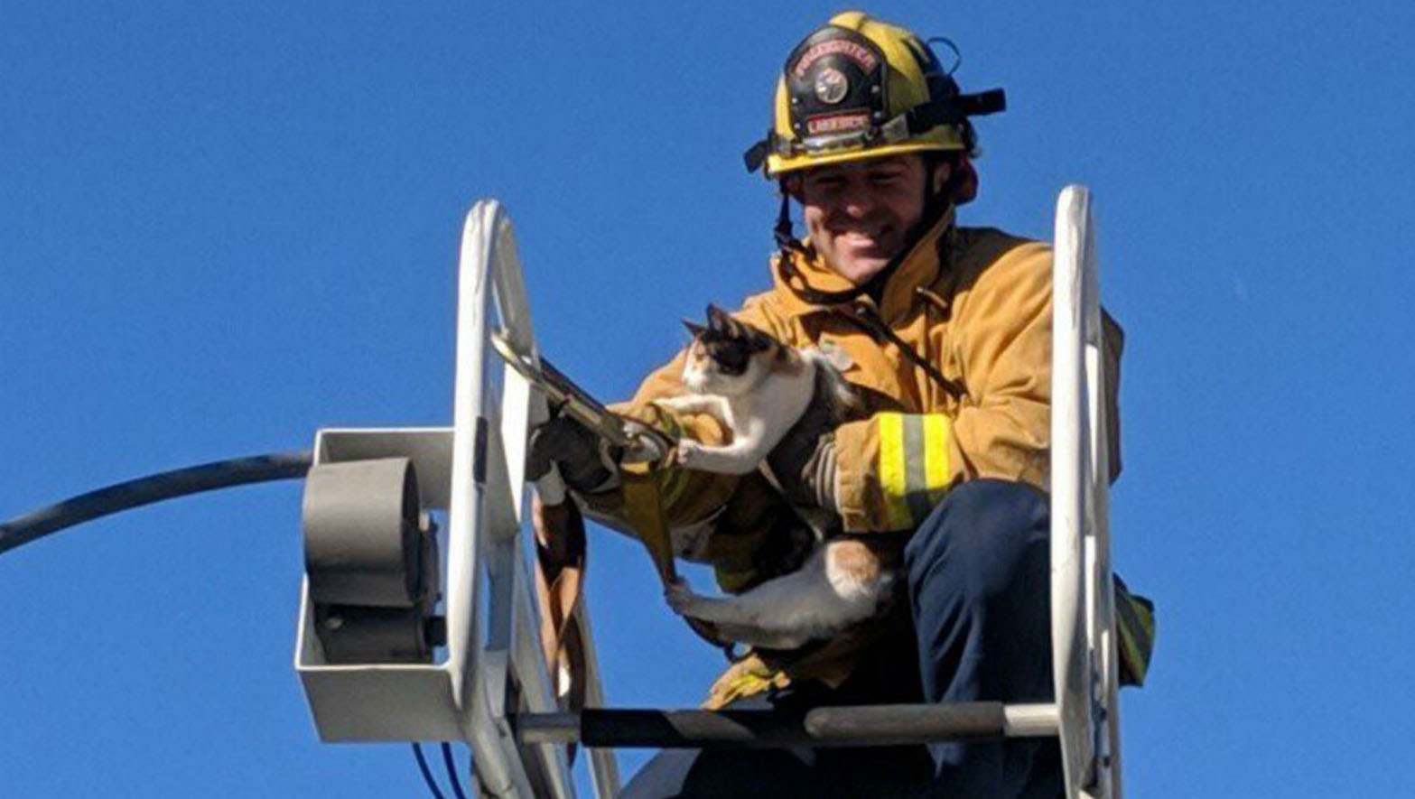 Firefighters Rescue Cat From Palm Tree
