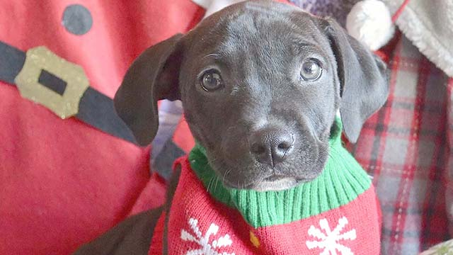 Helen Woodward Animal Center marks National Ugly Christmas Sweater Day by dressing up adoptable pups.