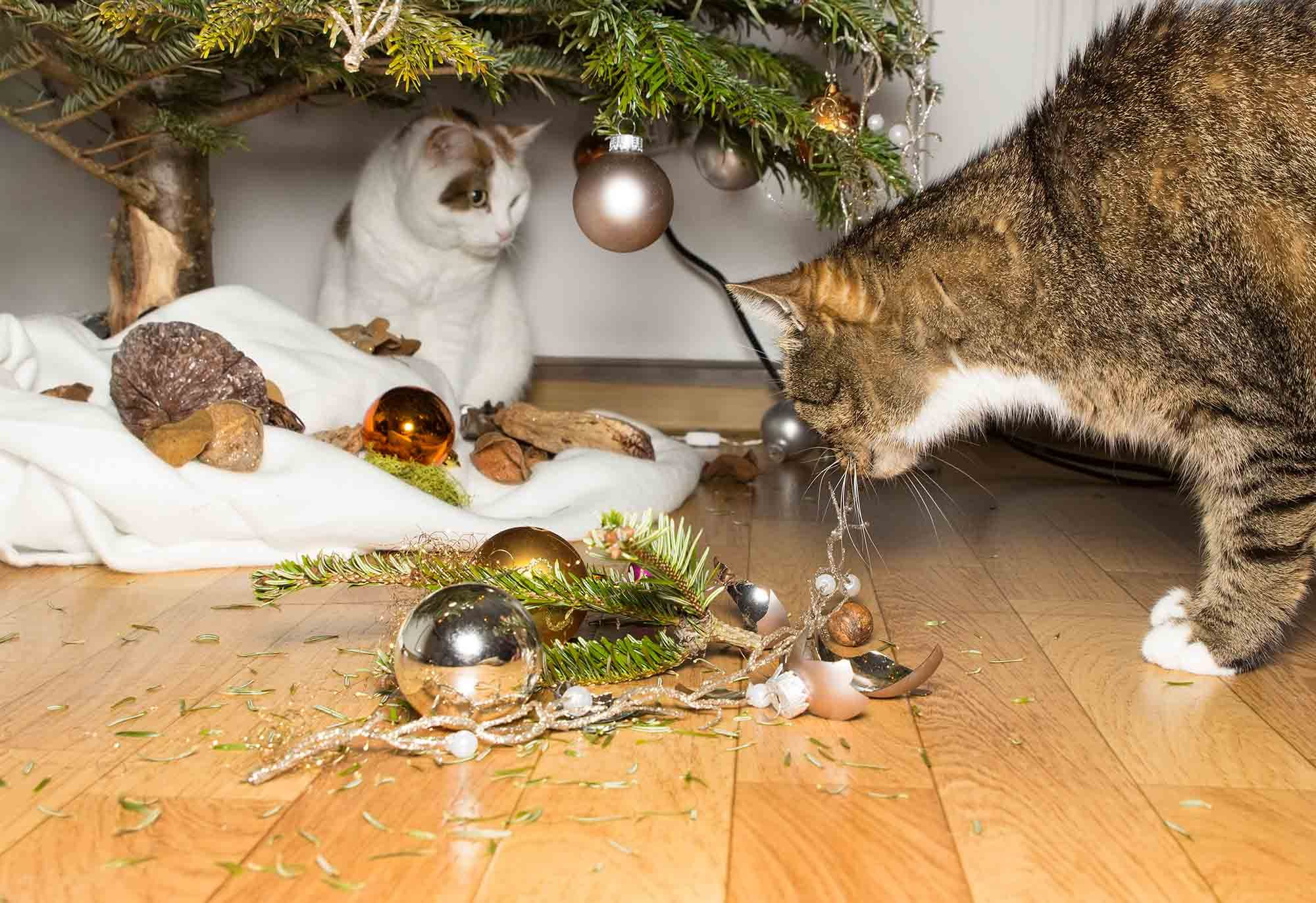 Holiday Decorations Pose Serious Safety Hazards For Pets
