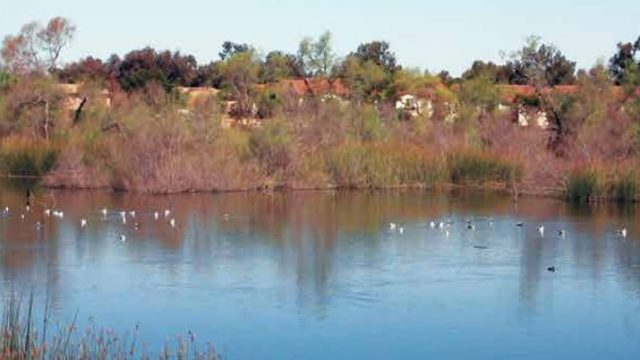A pond at the Tijuana Valley Regional Park