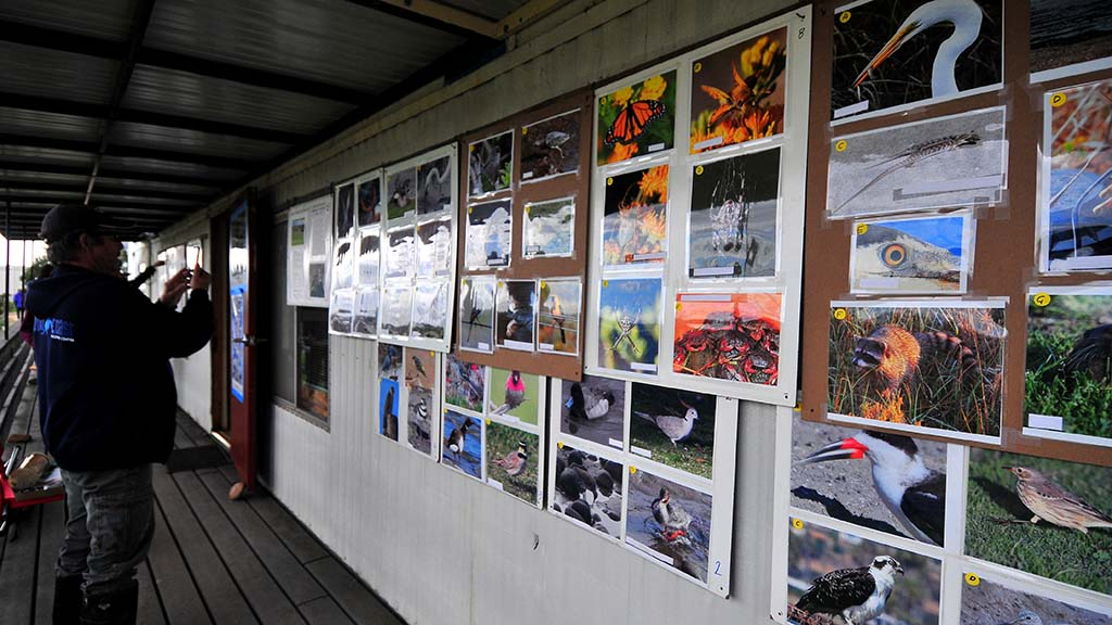 Photos of Kendall-Frost Mission Bay Marsh Reserve denizens were displayed on science trailer.