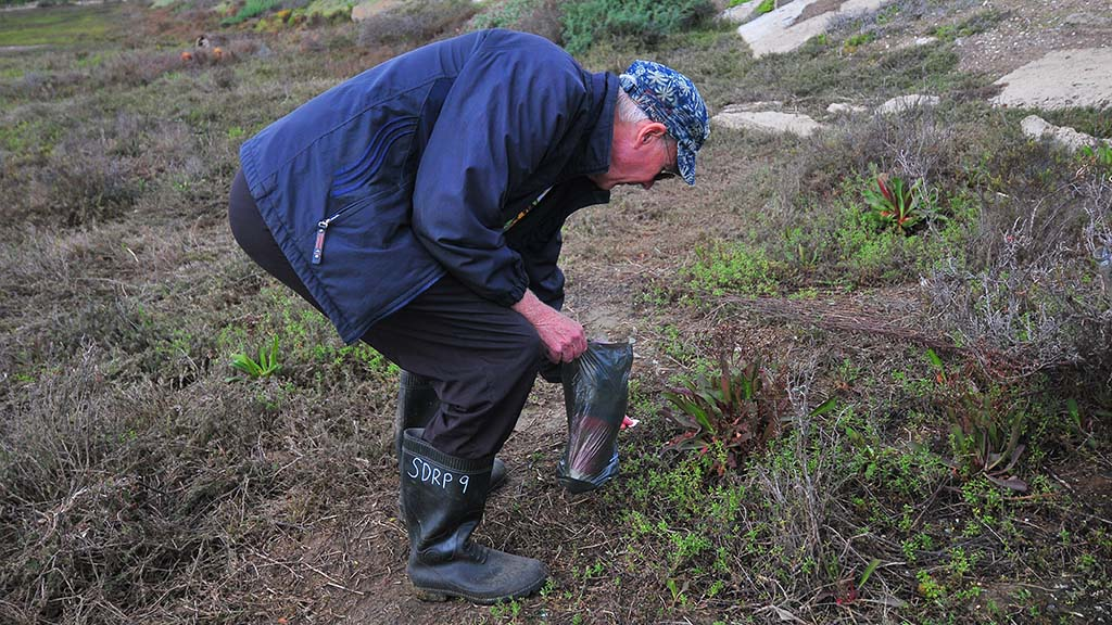 Peter Ward, picks up trash along the marsh walk on the 2019 Love Your Wetlands Day at the Kendall-Frost location in Pacific Beach.