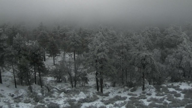 Snow accumulation on Mt. Laguna