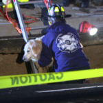Firefighter carriers the dog out of the sinkhole