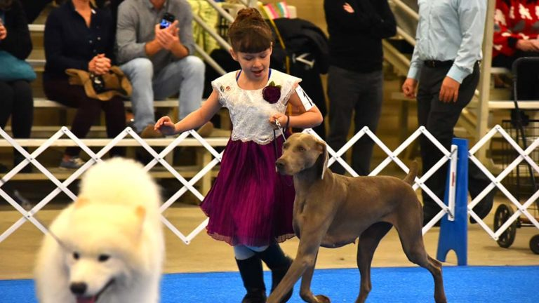 Madison Gardea, 10, shows off her junior handler skills with her Vizsla at the Silver Bay Kennel Club show in Del Mar.