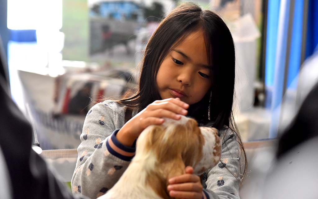 A little girl admires a Cocker Spaniel in the Meet the Breed section of the Silver Bay Kennel Club show.