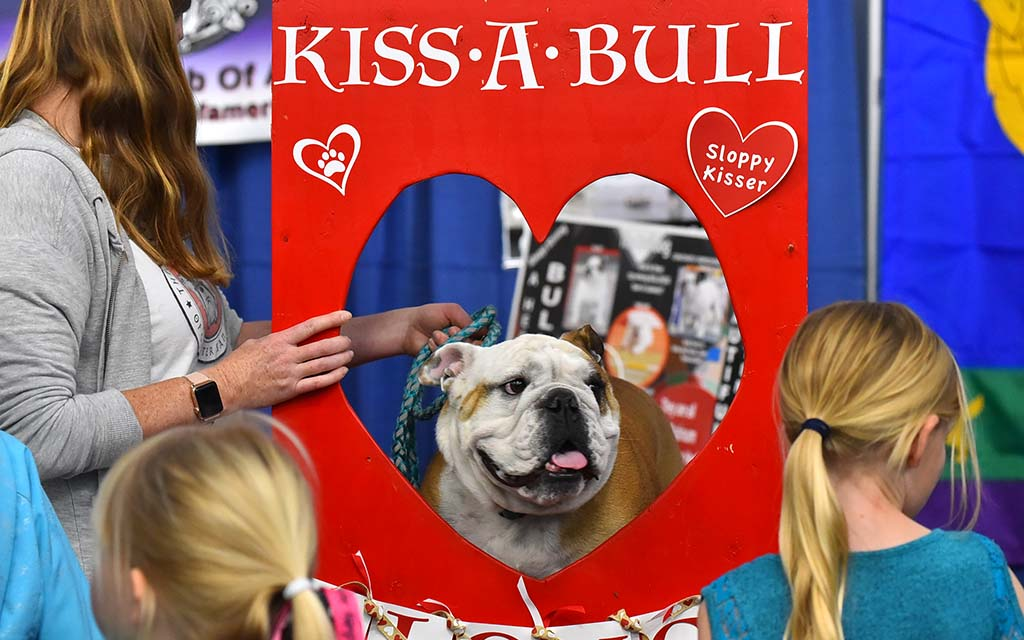 An English bulldog has its own kissing booth in the Meet the Breed section of the Silver Bay Kennel Club show in Del Mar.