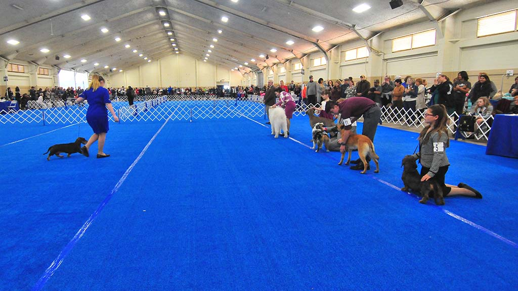 Dogs competed in two exhibit halls at the Del Mar Fairgrounds.
