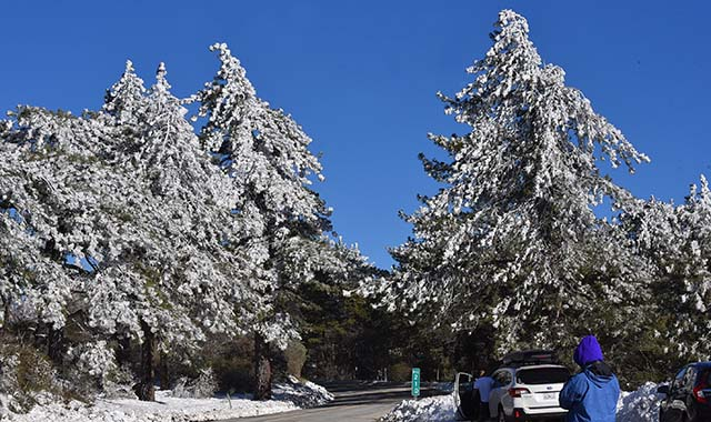 Snow in the Laguna Mountains in mid-February 2019.