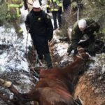 Horse Rescue Descanso
