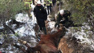 Horse Rescue Descanso