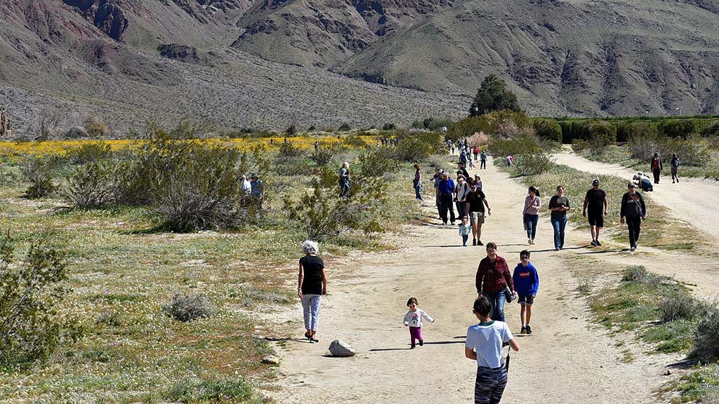 Visitors gathered where wildflowers were more abundant, at the end of Digorigio Road at the northern edge of Anza Borrego State Park.