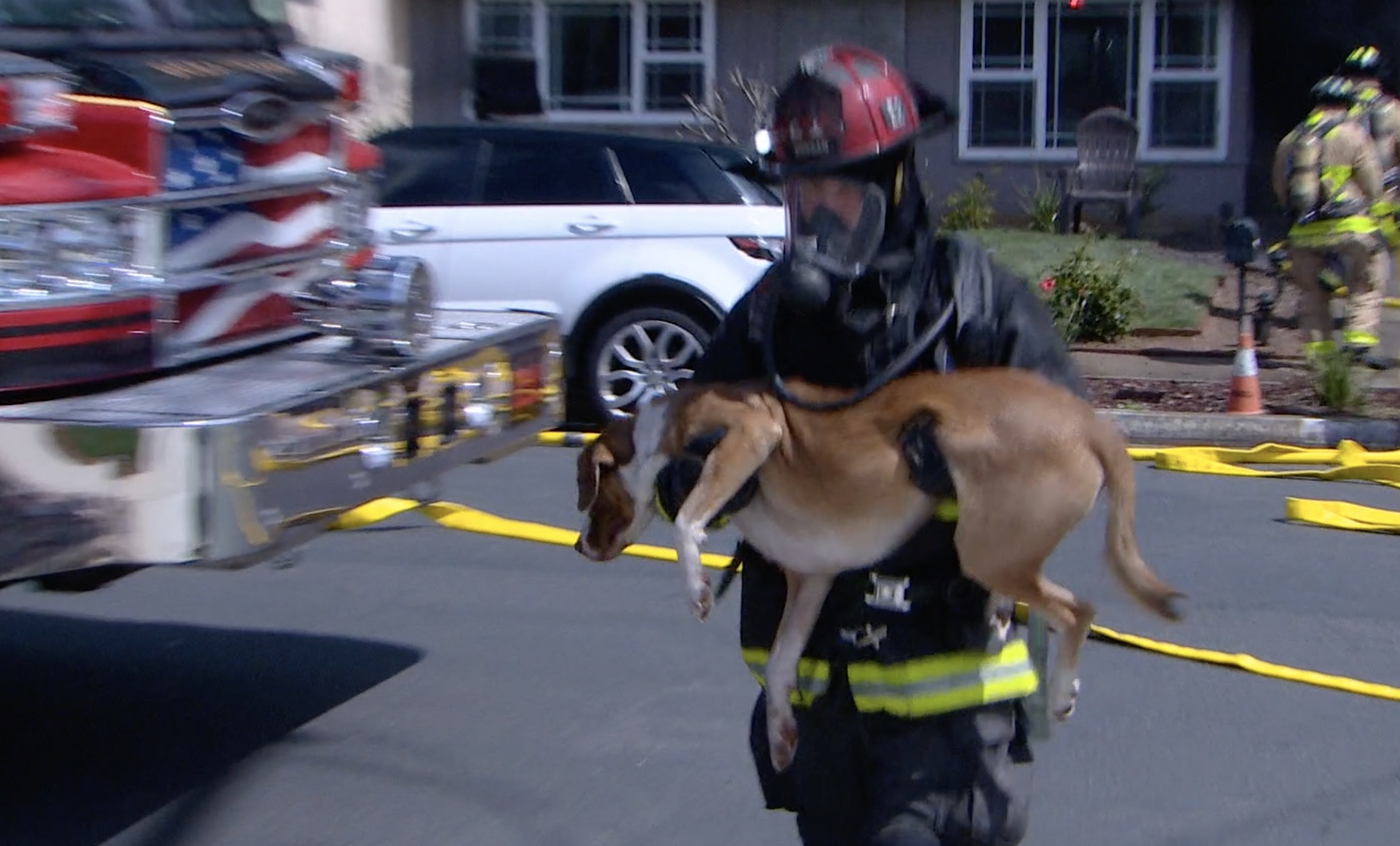 Firefighters Pull Dogs From Burning Carlsbad Home, Lifesaving