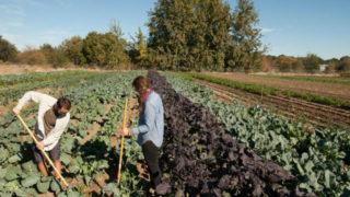 Organic farm in California