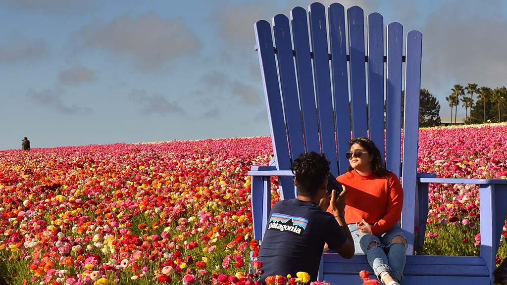 Oversized Adirondack chairs in The Flower Fields make for a good photo op.