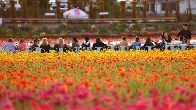 Sunset Wine Tasting & Food is offered on April 5, 12 and 19 amidst the flowers as the sun sets over the ocean in Carlsbad.