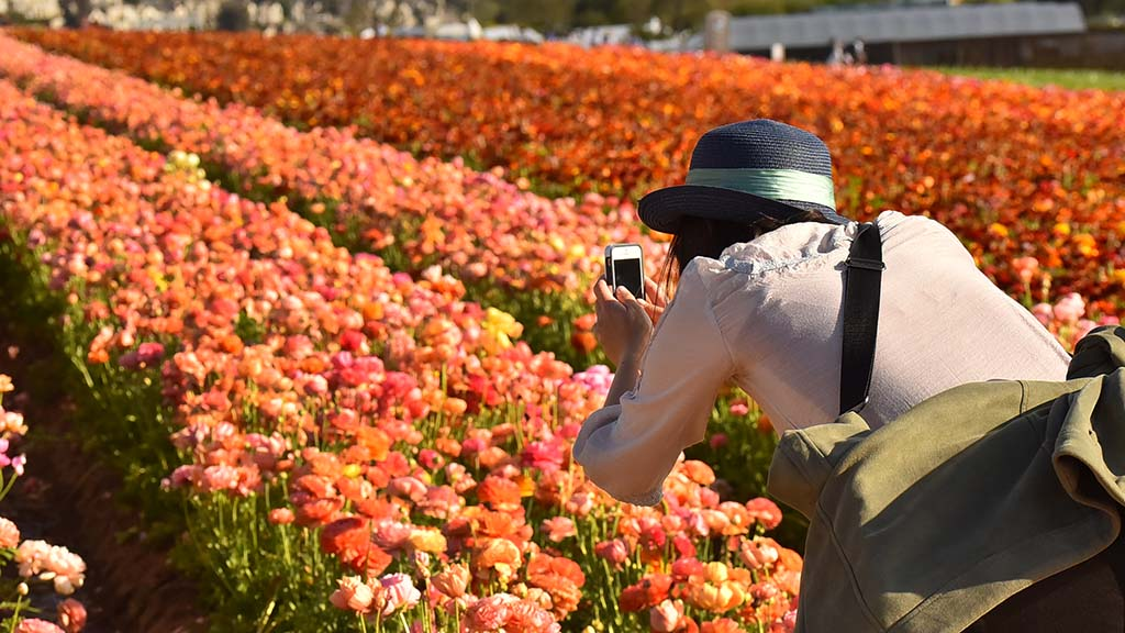Visitors are asked to stay on dirt paths while photographing to avoid trampling the millions of plants.
