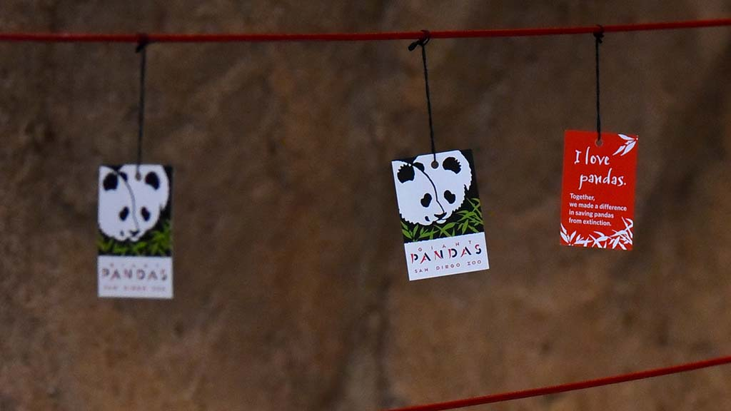 Cards along with bells will be added to the Giant Panda Friendship Wall for the next few weeks in April.