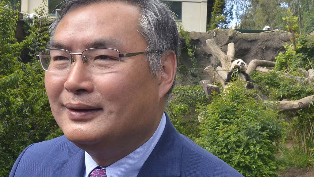 Consul General Zhang Ping of the People's Republic of China speaks to media as Bai Yun munches on bamboo in the background at the San Diego Zoo.