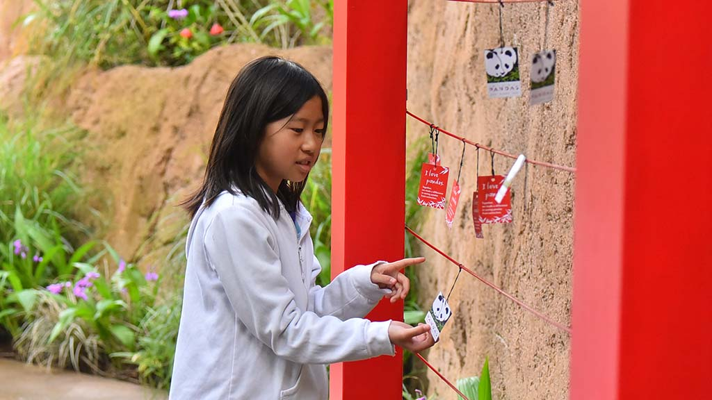 Lyndsey Hi of Los Angeles looks at panda cards attached to the Giant Panda Friendship Wall designed to commemorate the panda breeding program at the San Diego Zoo.