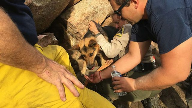 German shepherd mix later named Rocksann is comforted during boulder rescue.