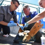 SeaWorld rescuers applying ointment on the injured seal.