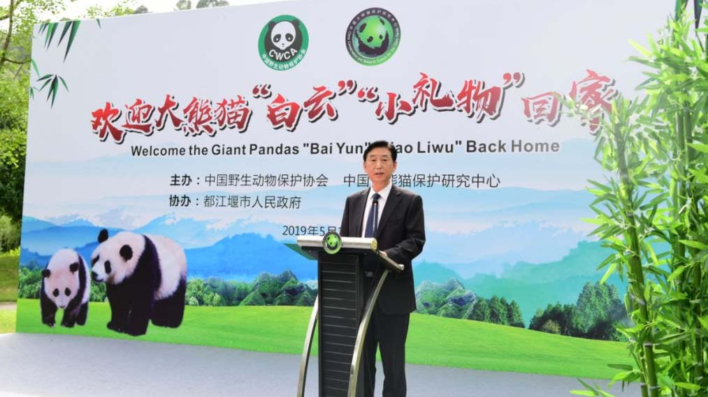 Zhang Haiqing, deputy director of China Giant Panda Conservation Research Center.