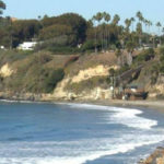 Trees along the coastline in Encinitas