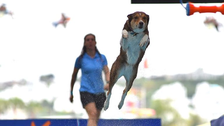 Andrea Rigler watches Leap the dog jump toward a toy elevated above a pool of water in an Extreme Dog show at the Del Mar Fair.