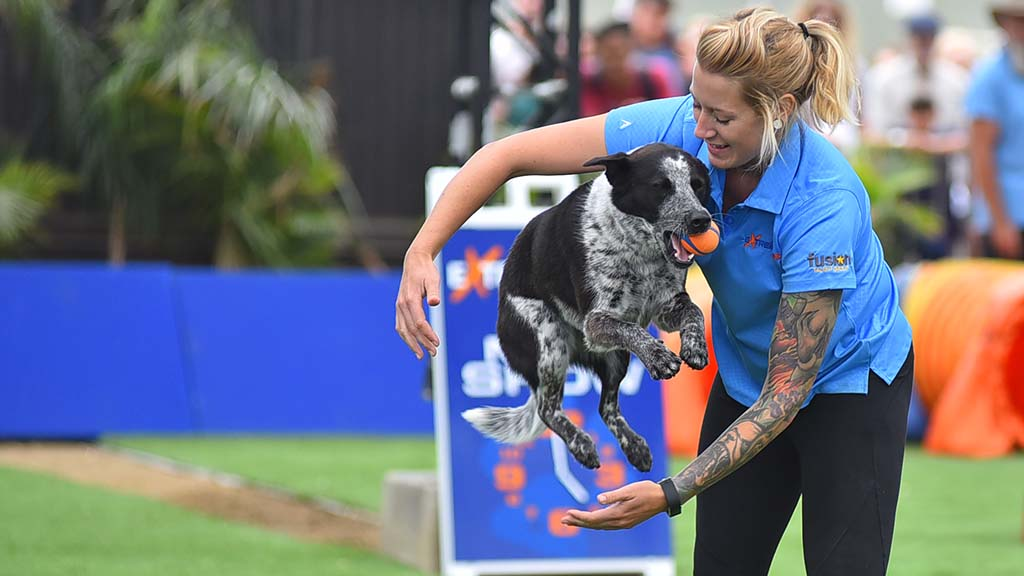 A dog leaps through the arms of a trainer in the Extreme Dog show at the San Diego County Fair.