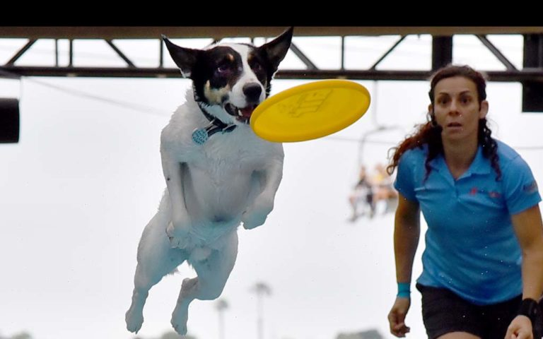 Trainer Andrea Rigler watches Leap the dog jump for a Frisbee before landing in  pool in an Extreme Dog show at the San Diego County Fair.