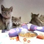 Kitten breeding is of special concern to county.