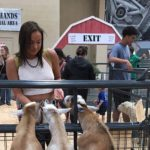 "A young women feeds goats at the San Diego County Fair with a sign behind her instructing: ""Please wash hands when exiting animal area."""