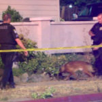 Police investigate the shooting in Escondido