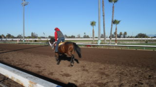 Morning workouts at Los Alamitos