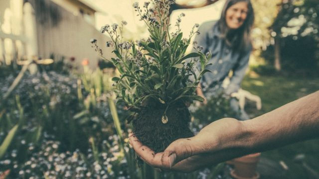 Armstrong Garden Centers Offers Gardening Classes In September