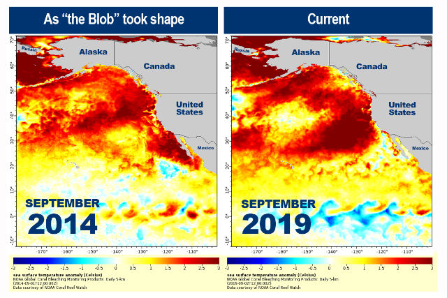 Charts compare Pacific Oceans warming in 2014 and 2019